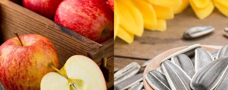 Apfel + Sonnenblumenkerne